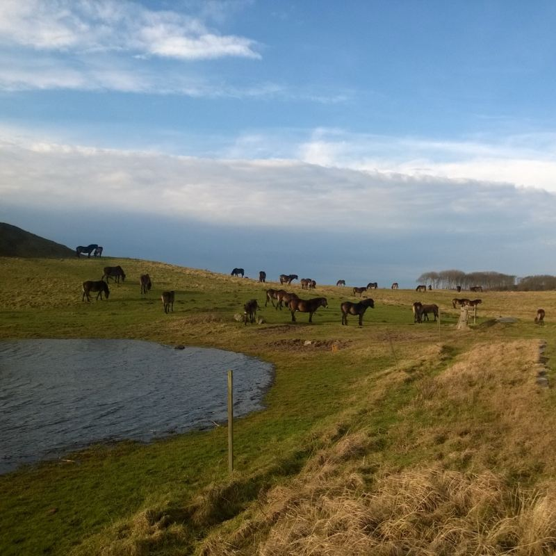 naturen de vilde heste ved gulstav