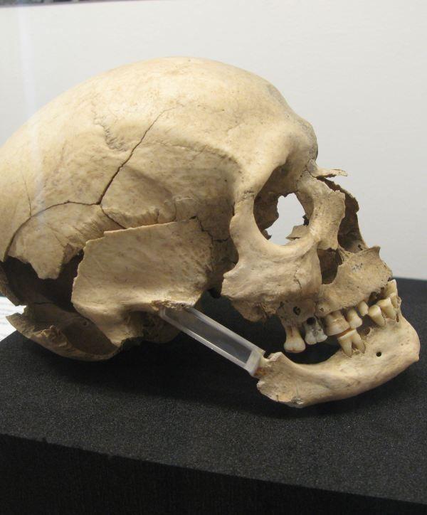 Oldtidsminder kranie Langelands Museum