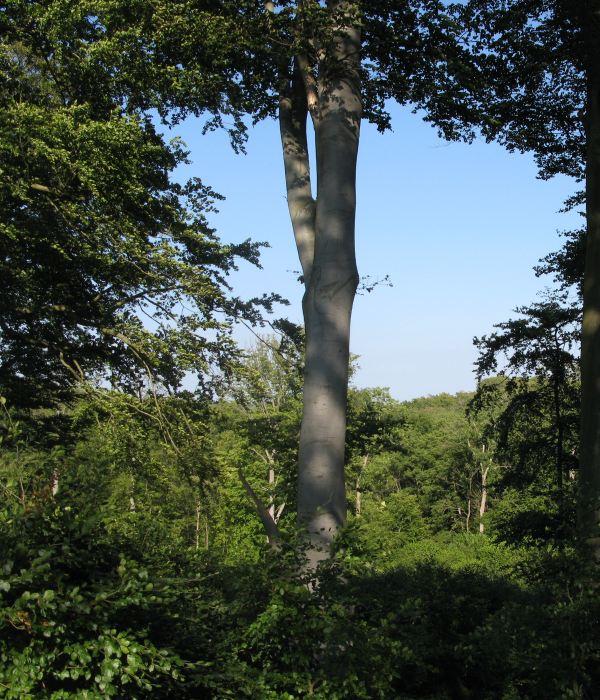 hennetved haver skovsgaard gods