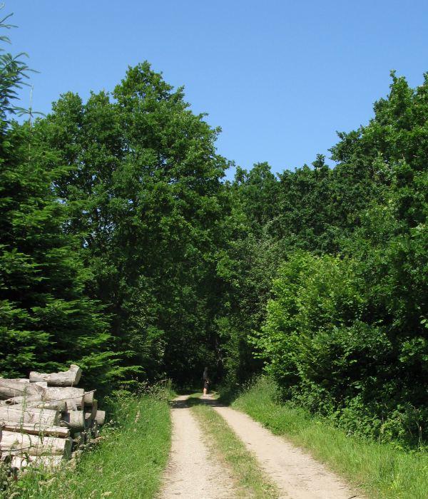 Naturen Skovene på Nordlangeland